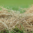 Stock Photo: Hay close up
