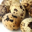 Quail egg background - Stock fotografie