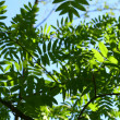 Incredible green leaf foliage — стоковое фото #9356340