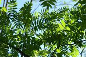 невероятно зеленый лист листва — Стоковое фото