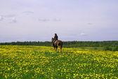 白马骑士 — 图库照片