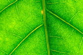 Green leaf — Photo