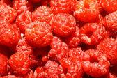 Raspberry — Стоковое фото