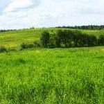 Green grass field — Stock Photo #9386754