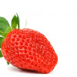 One strawberry — Stock Photo #9495122