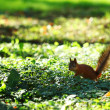 Squirrel in the autumn forest — Stockfoto #9495551