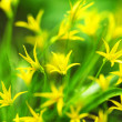 Yellow spring flowers — Stock Photo #9495726