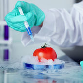 Tomato DNA change — Stock Photo