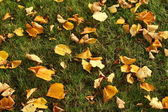 Leaves on grass — Stock Photo