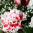 Carnation bouquet — Stock Photo