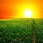 Sunrise on dandelion field — Stock Photo