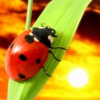 Ladybug sunrise - Stock Photo