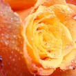 Orange rose macro — Stock Photo #9989796