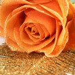 Orange rose with golden decoration — Stock Photo