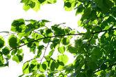 Follaje hoja verde increíble — Foto de Stock
