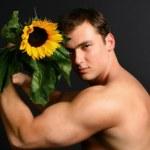 Sunflower — Stock Photo #9990201