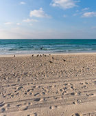 Sandy beach with lots of footprints and a blue sky with clouds and birds on sand — Stock Photo