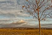 Saskatchewan Landscape — Stock Photo
