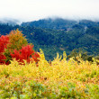 Stock Photo: Coloured Autumn Vineyards