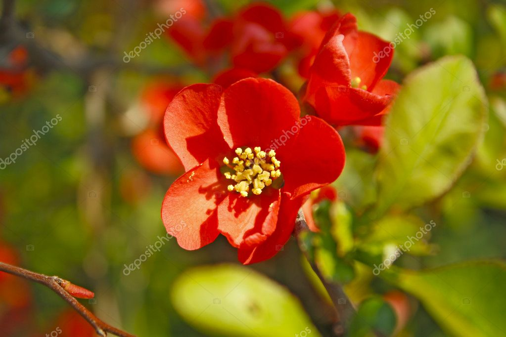 Red spring flowers on a green background — Stock Photo #9063559
