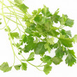 Parsley isolated on white background - Stock Photo