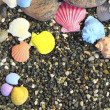 Bright multi-colored cockleshlls on a pebble — Stock Photo #8798952