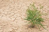 La planta en el fondo de la tierra agrietada — Foto de Stock