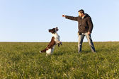 Dogtraining with English Springer Spaniel — Stock Photo