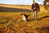 English Springer Spaniel chasing leaves — Stock Photo