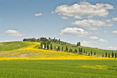 Spring in Tuscany — Stock Photo