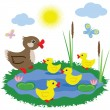Pond with ducks - Stock Photo