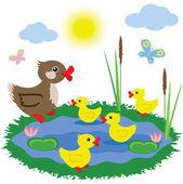 Pond with ducks — Stock Photo