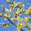 Kittens in spring blooming tree branch blue sky — Stock Photo #10048568