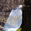 Stock Photo: Birch tree sap drink flow to polyethylene bag