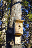 Newly nailed wooden bird nesting-box on tree. — Stock Photo