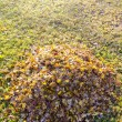 Pile of rape up fallen leaves in autumn. — Stock Photo #8054732