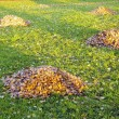 Raken leaves piles in autumn yard. Garden cleaning — Stock Photo
