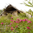 Abandoned village. Crumbling house garden residue — Stockfoto