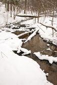 Fließende Wasser von Wald-strömen im Winter. Küste Schnee — Stockfoto