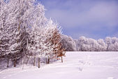 Trees cover frost beautifully sunlight sun winter — Stock Photo