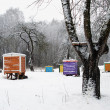 Hives cover snow colorful bee house winter tree — Stock Photo
