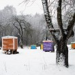 Hives cover snow colorful bee house winter tree — Foto Stock