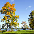 Colorful trees early autumn lake backdrop blue sky — Stock Photo