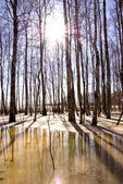 Melting snow ice and birch tree trunk sunlight — Stock Photo
