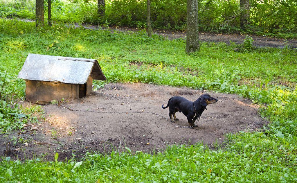 Casa del cane bassotto dell 39 animale domestico cane for Piani casa cane trotto