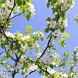Blooming apple tree branch on background of sky — Stock Photo #9755417