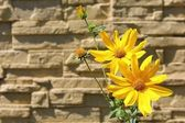 Flowers in front of a wall — Stok fotoğraf