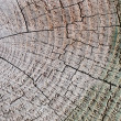 Royalty-Free Stock Photo: Tree circle texture
