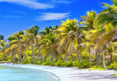 Beautiful tropical beach with palm trees postcard — Stock Photo
