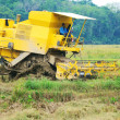 Harvesting paddy with harvesting machine — Stock Photo #8814545